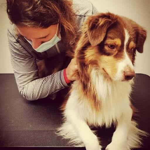 Ostéopathie Animal ou l'art de murmurer à l'oreille des animaux - Justine Dubois - Ostéopathie pour animaux à Roncq